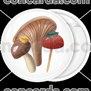 Κονκάρδα μανιτάρια κλασσική